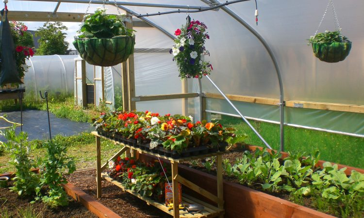 35-Your garden demands a Poly tunnel!